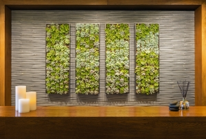 Spa Anjali living wall med